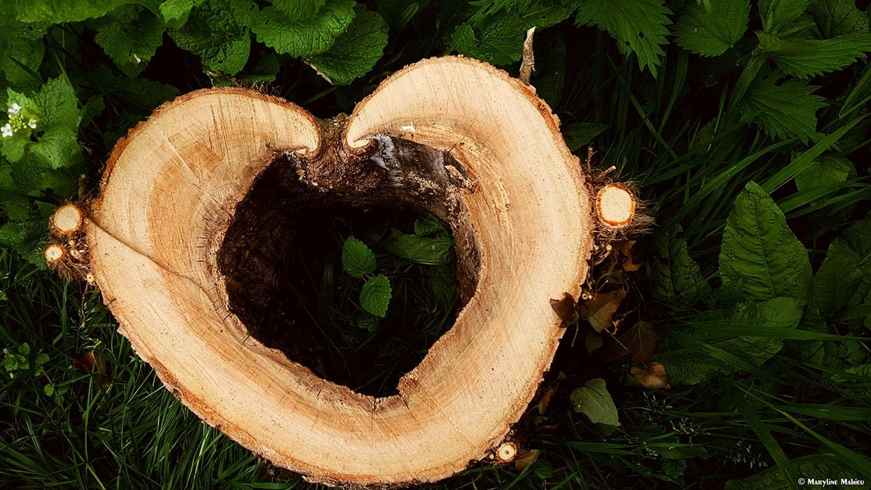 Mon coeur de bois brûle pour toi